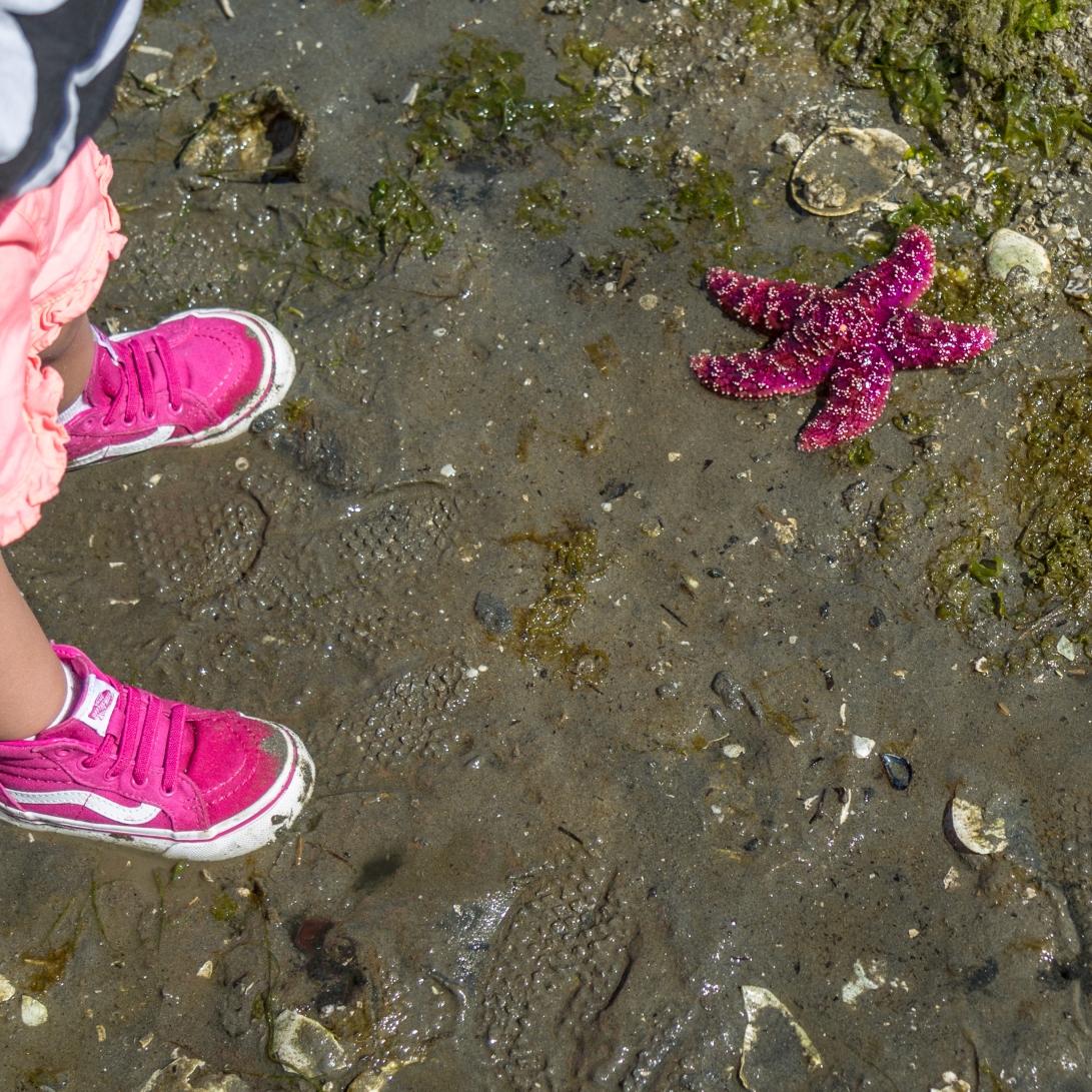 pinkstarfish