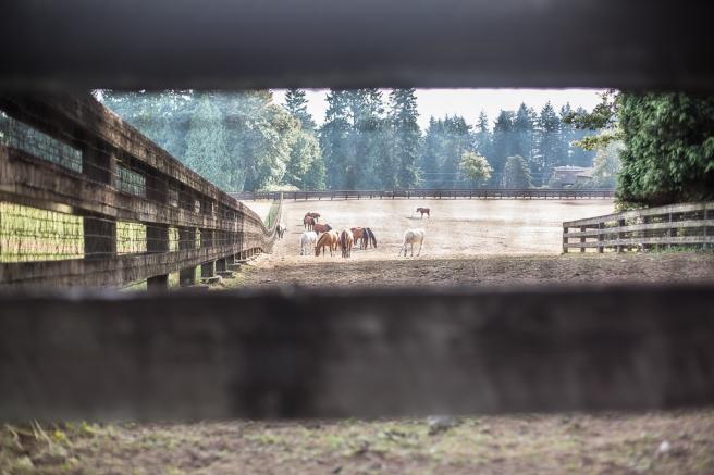 horsies4X1A3005