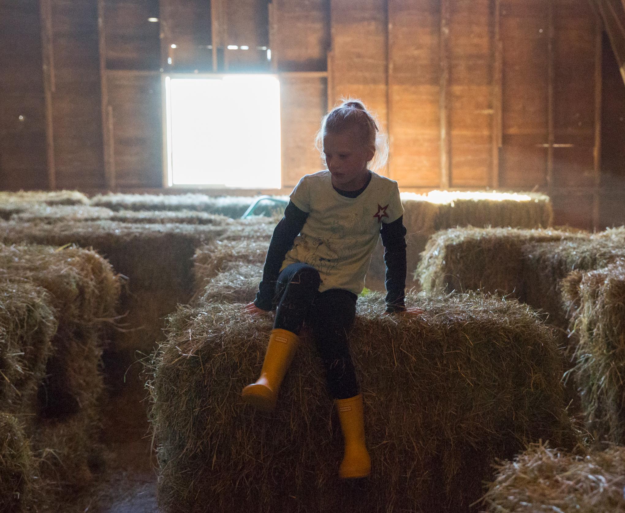 pumpkinfarm4X1A6457