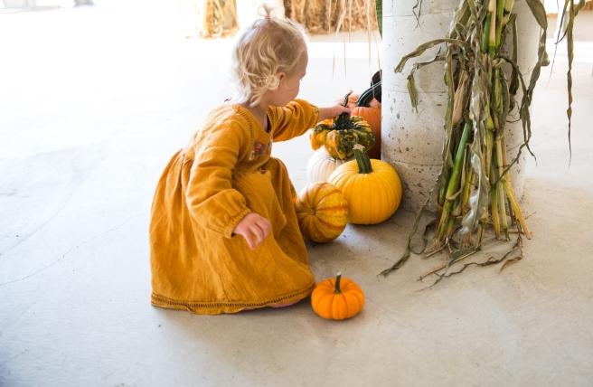 pumpkinfarm4X1A6483