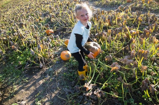 pumpkinfarm4X1A6563