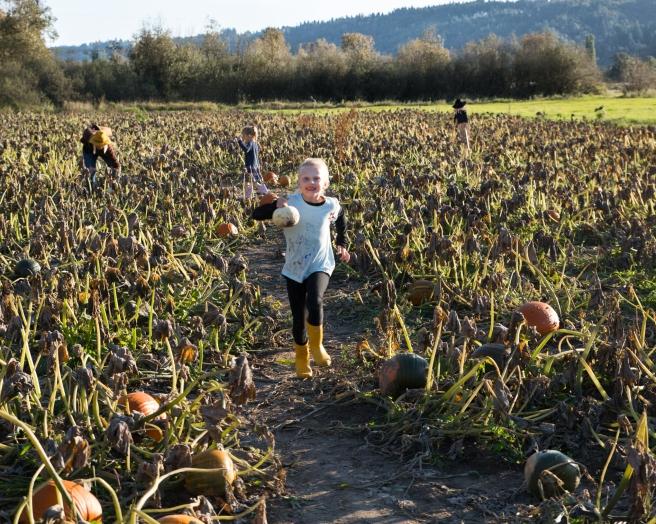 pumpkinfarm4X1A6613