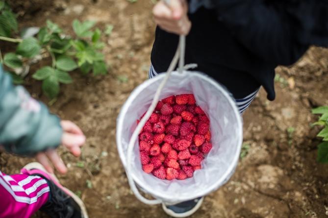 raspberrypicking-6221
